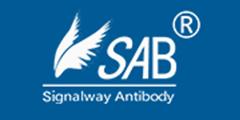 Signalway Antibody L